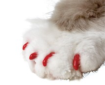 Soft Claws® Nail Caps for Cats and Dogs by Smart Practice
