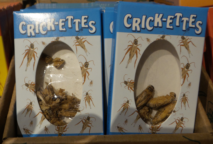 The crickets had a mouth-feel like a cross between pork rinds and peanut skin